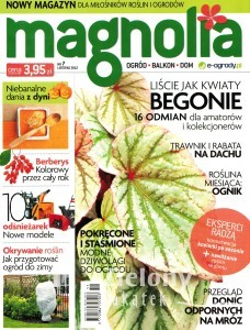 Magnolia nr7